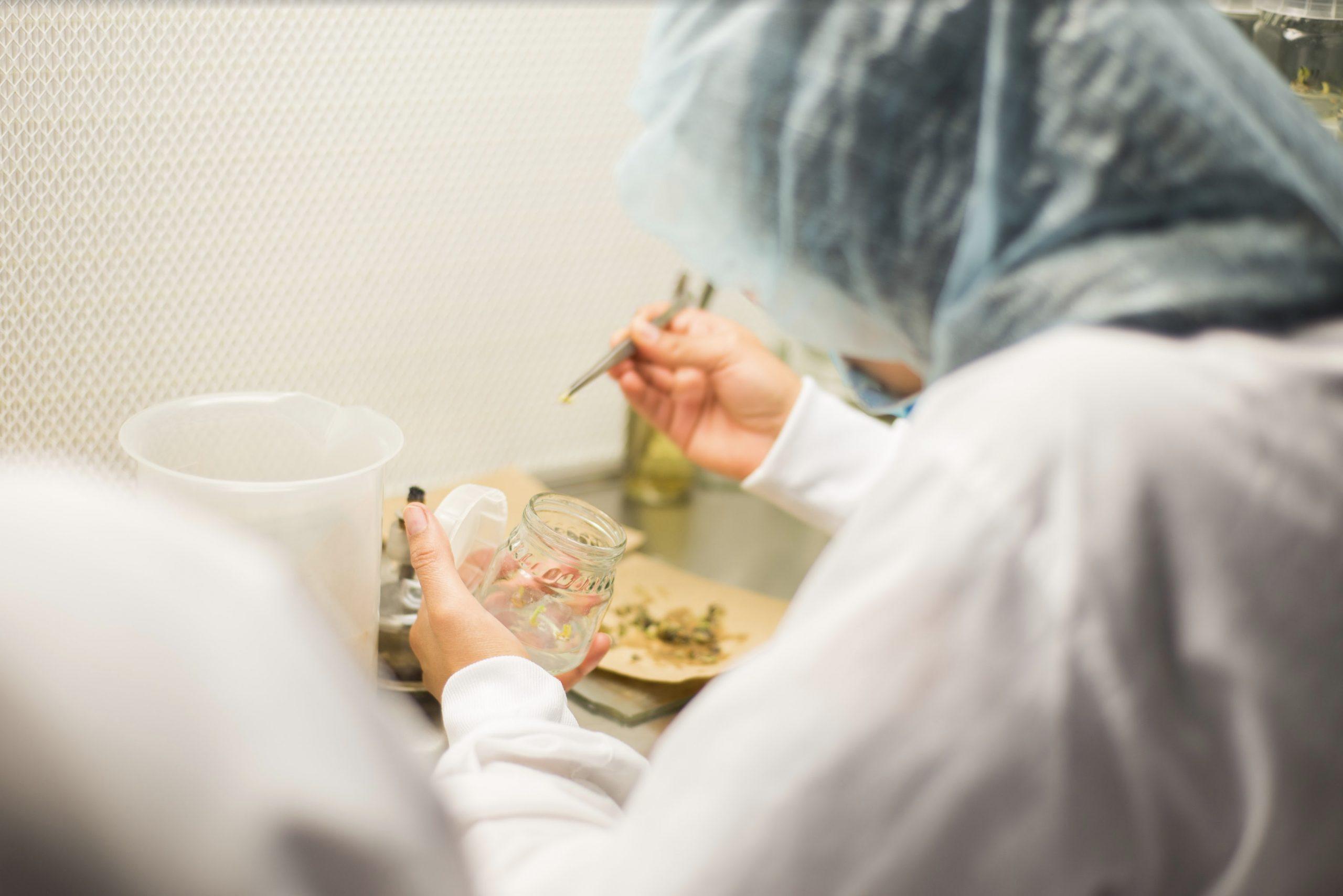 Laboratorio de Biotecnología Vegetal